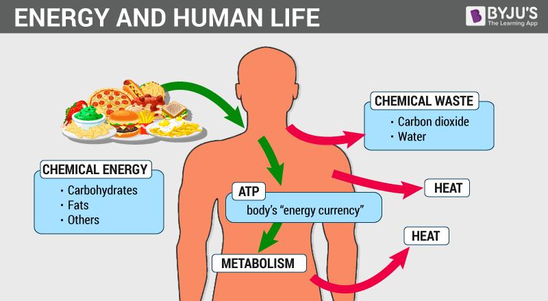 ENERGY-AND-HUMAN-LIFE-2