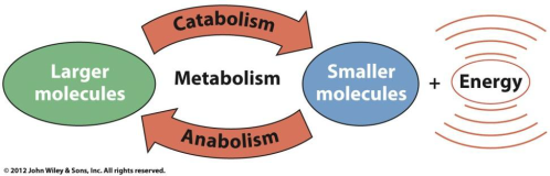 view_of_metabolism-141ABDC73205BC00204.png